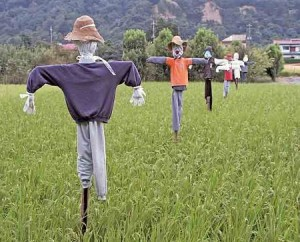 scarecrows in a field