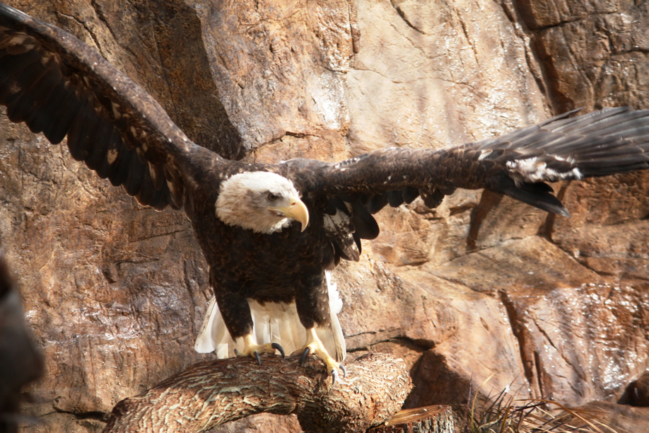 """We like to call eagles the """"fish of the sky!"""""""